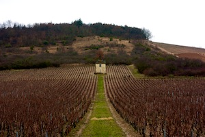 Givry vineyard