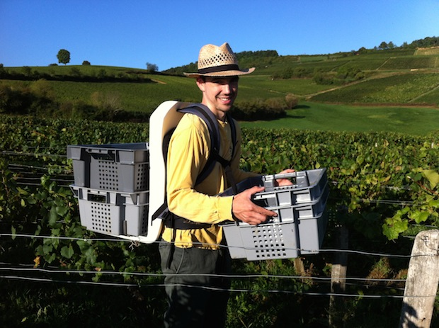Eric carrying crates of grapes.