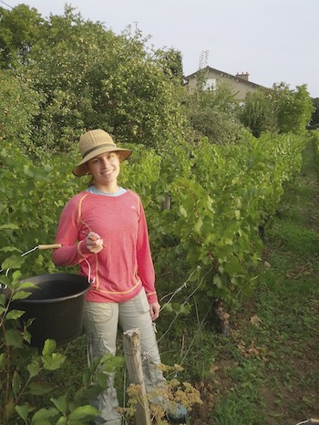 Tiffany getting ready to harvest some grapes in Saint-Vallerin.